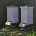 langstrothhive